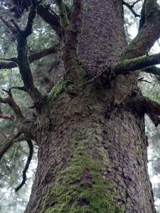 Individuation tree